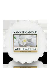 Tartelette Gardenia Blanc 5,6x1,5cm