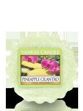 Tartelette Ananas Coriandre 5,6x1,5cm