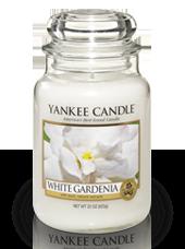 Grande jarre Gardenia Blanc 10,7x16,8cm
